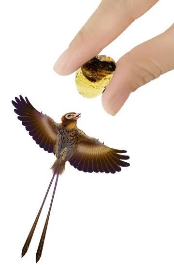 Recriação de um dos pássaros encontrados presos no âmbar.