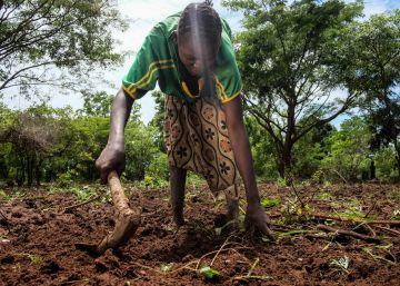 Agnes Yassinodka, trabaja en el campo en Makangue, República Centroafricana, en abril de 2016.
