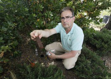 Un plan para evitar que el mosquito tigre llegue a Madrid
