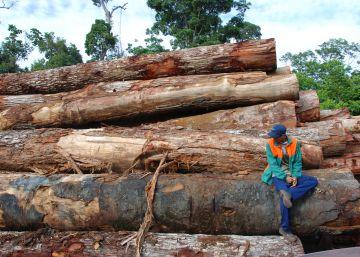 El fin de la deforestación no basta para salvar la selva amazónica