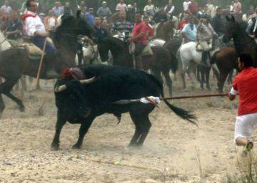 Tordesillas denied license to kill Toro de la Vega bull this year