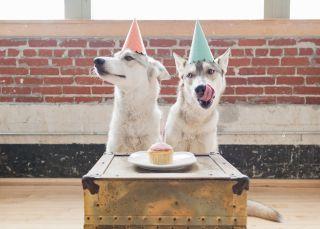 Las últimas locuras 'foodie': comida vegana para perros y vino para gatos