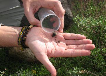 Más de 200.000 escarabajos se instalan en la universidad
