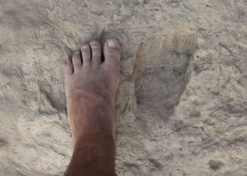 Otra especie humana ya caminaba como nosotros hace 1,5 millones de años