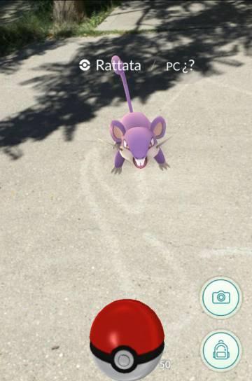 Yo capturando al Rattata.