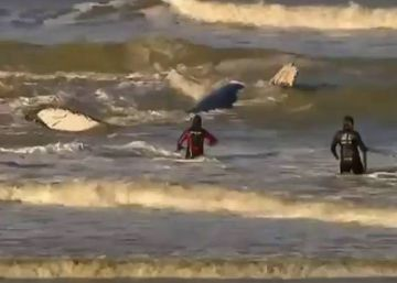 Liberada una ballena que llevaba un día encallada en una playa argentina