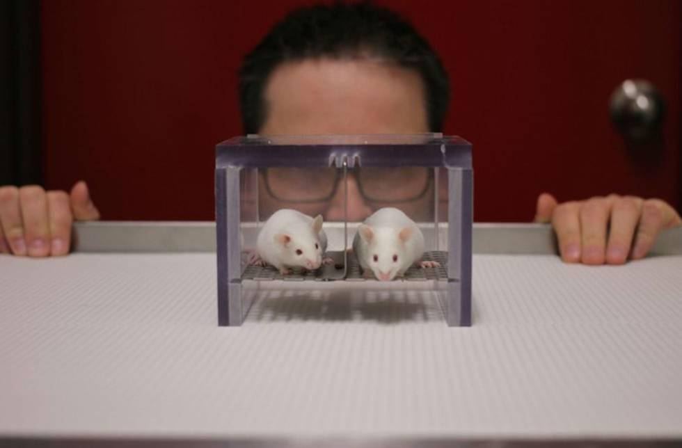 Un investigador en un laboratorio