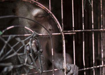 El mercado de animales de Pramuka