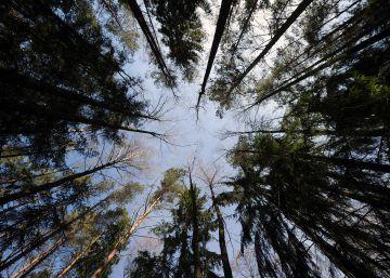 Bosques sostenibles contra el cambio climático