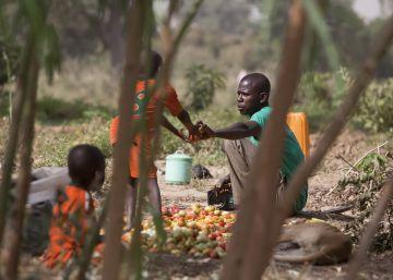 Conjugar bosques y cultivos
