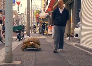 Mi mascota es una tortuga gigante