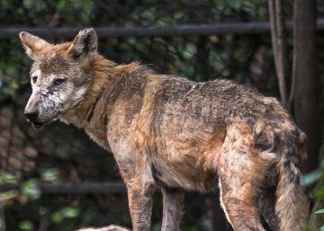 Zoológicos en México: el show debe terminar
