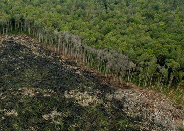 El mayor movimiento para salvar los bosques llega a los 100 millones de hectáreas