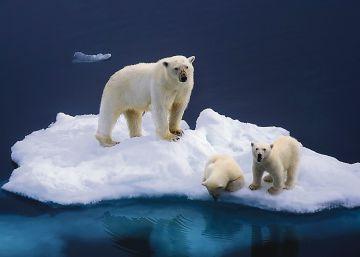 El Ártico lanza una llamada de socorro
