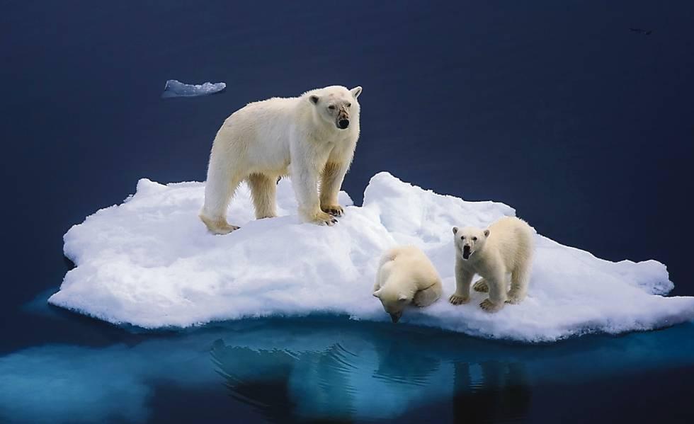 El deshielo del Ártico afecta gravemente a la fauna.