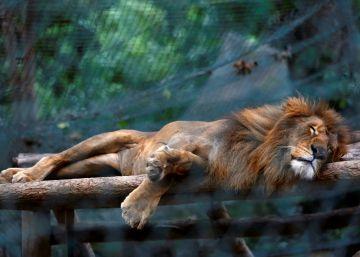 El hambre mata a decenas de animales del Zoo de Venezuela