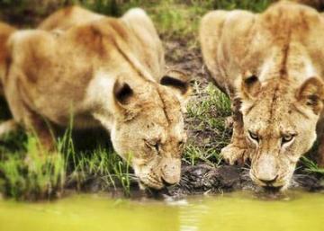 Los mejores sitios del mundo para ver animales en libertad