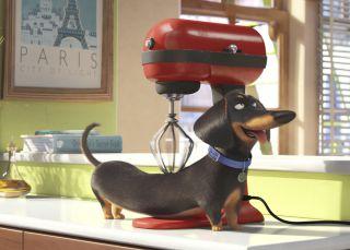 ¿Qué hace de verdad tu mascota cuando la dejas sola en casa?