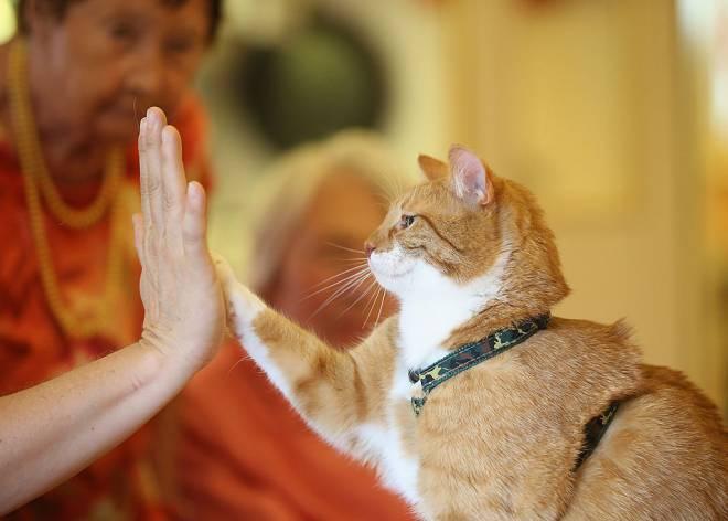 Los amantes de los gatos son más cultos que los de los perros (según Facebook)