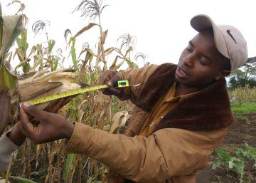 Los jóvenes agricultores, la piedra angular del desarrollo sostenible