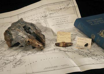 Descubierta una especie de delfín extinta en la colección del Smithsonian