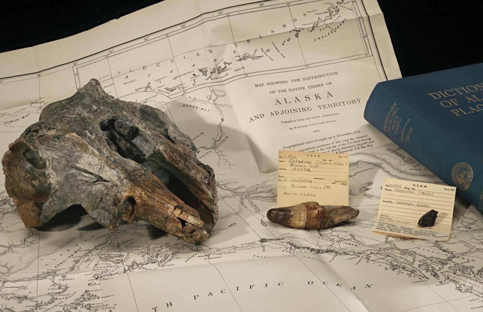 El fósil del delfín estudiado junto a un mapa del lugar dónde fue hallado. James Di Loreto Smithsonian)