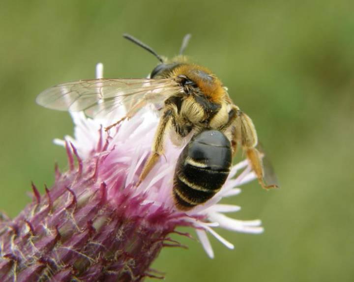 El caso de las abejas desaparecidas. - Página 3 1471356045_891982_1471360616_sumario_normal_recorte1