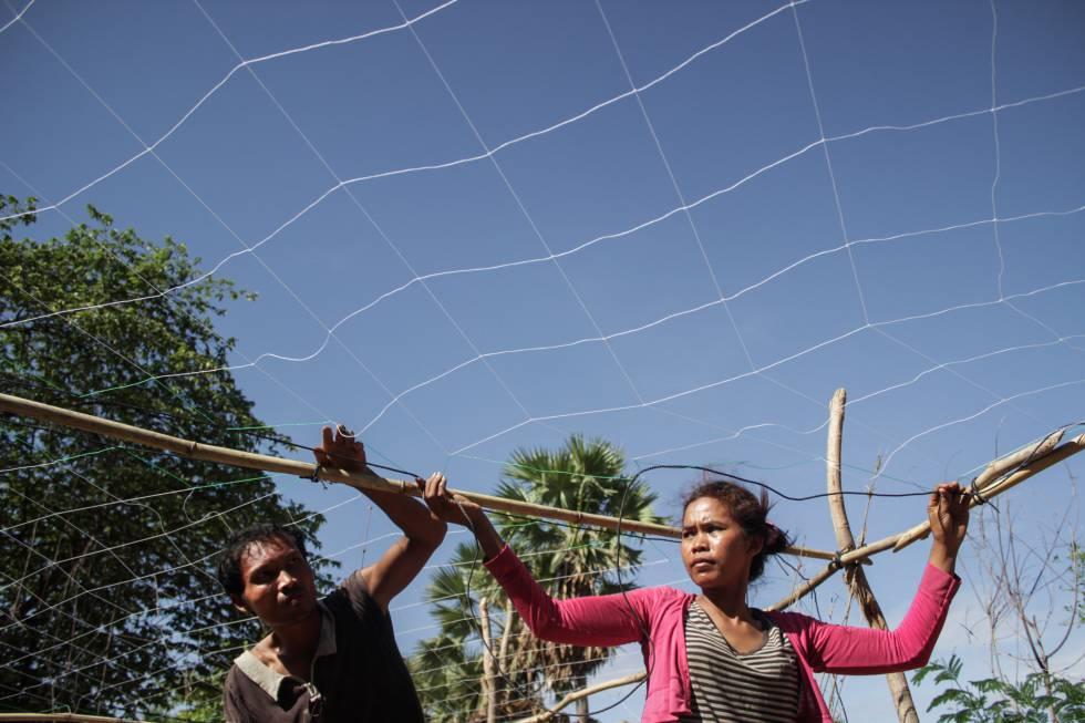 Phaly y su marido preparan una red para comenzar la siembra de judías que poseen un tallo en forma de enredadera.