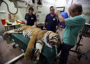 Los animales del zoo de Gaza parten hacia una nueva vida