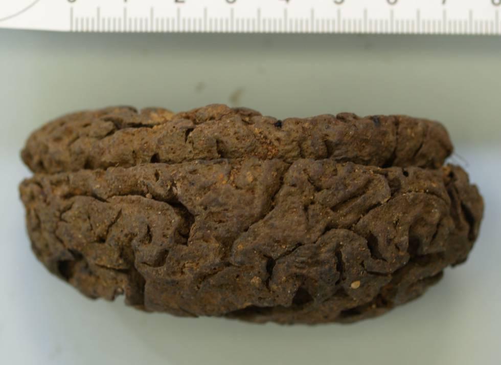 Uno de los 45 cerebros conservados en La Pedraja.