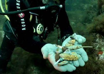 El fondo del mar, un vertedero de plomos, bujías y sedales