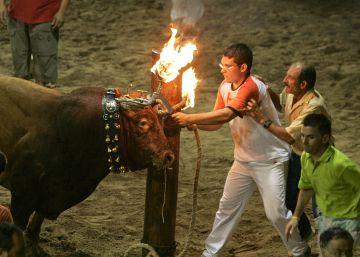 Fiestas con reses: tradición o salvajada