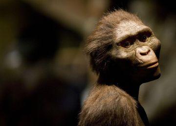 Así murió 'Lucy', la australopiteca