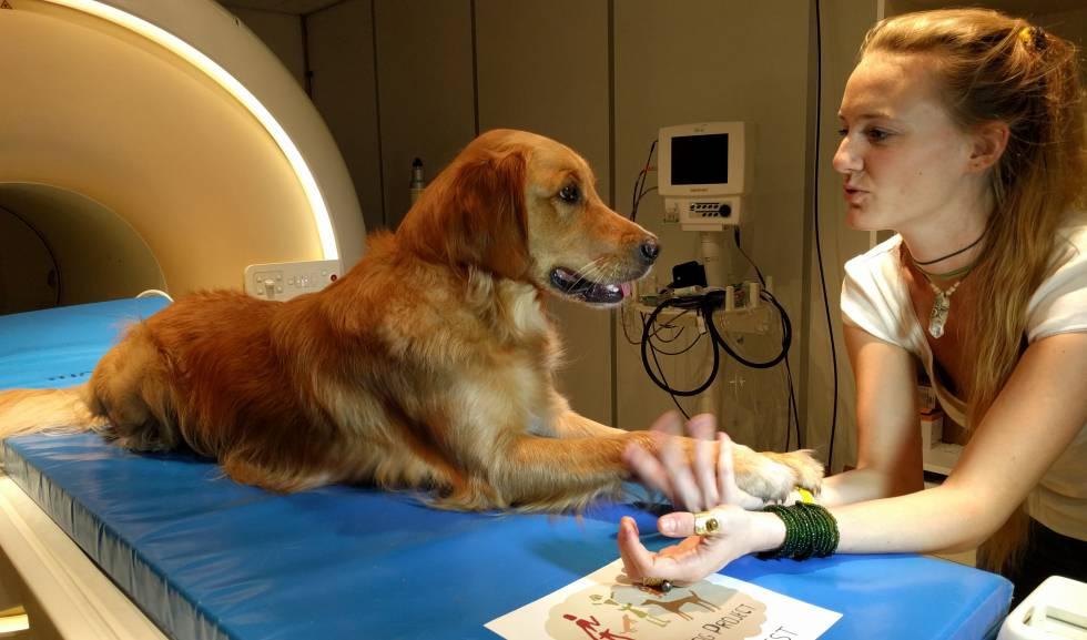Uno de los perros junto a una de las investigadoras durante el estudio.