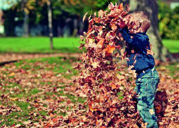 El otoño, la estación preferida por los ácaros