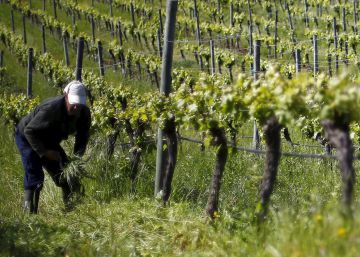 A festa do vinho chileno
