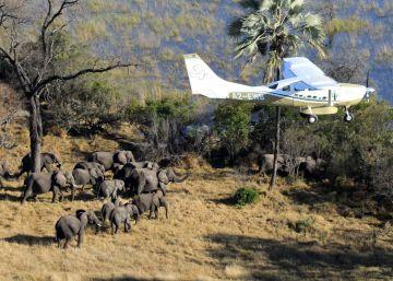 La humanidad ha matado a 144.000 elefantes en siete años, el 30% de los que quedaban