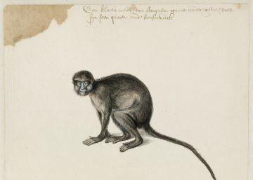 Los dibujos inéditos de Frans Post