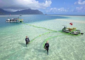 Las playas blancas son excrementos de un pez esencial para la humanidad