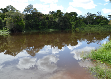 Nuevas amenazas para la reserva del Dja, en Camerún
