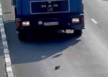 ¿Se puede parar en una autovía para salvar a un cachorro?