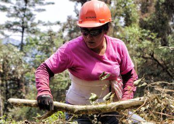 Comunidades que viven con y del bosque