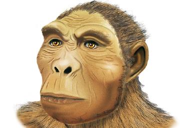 El rompezabezas de la evolución humana