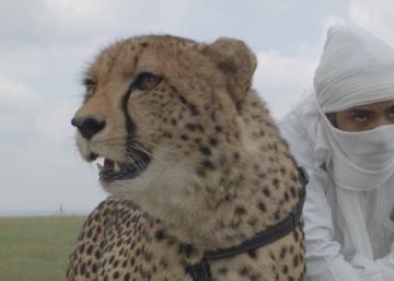 Compromiso y música (179): Bailando con guepardos