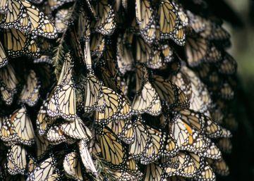 Efecto mariposa contra el hambre