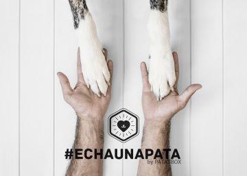 La campaña que agita las redes y ayuda a mascotas abandonadas