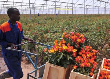 Tanzania quiere plantar cara a la Unión Europea