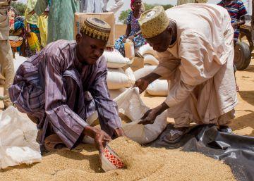 El arroz llega a Chetimari