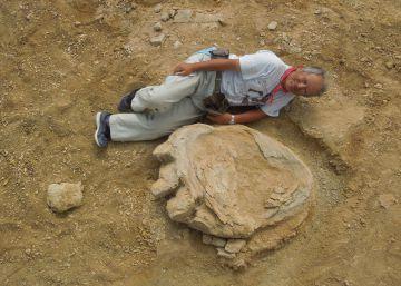 Encontrada una de las huellas de dinosaurio más grandes del mundo