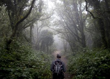 Bosque nebuloso en Algeciras